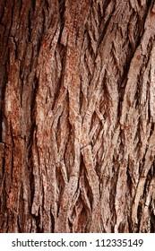 Bark Tree texture full frame in nature