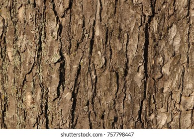 Bark of tree texture. Natural forest background.