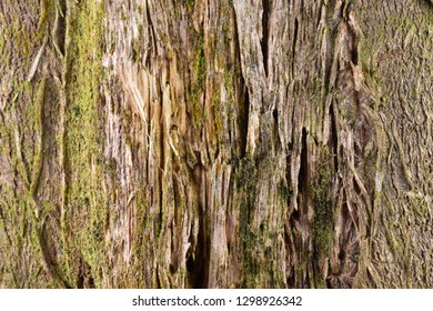 bark of a tree texture pattern background
