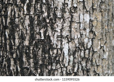 bark of tree texture , soft focus