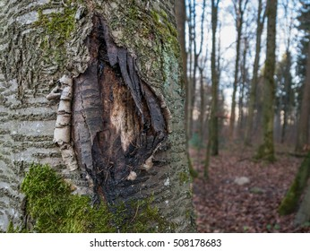The bark of a tree torn open