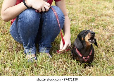 Barking Dachshund dog sitting beside owner