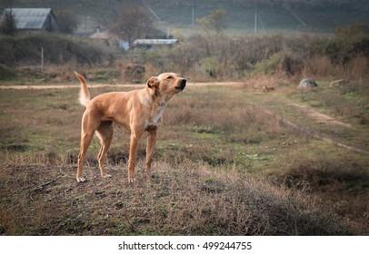 Barking dog. Security.