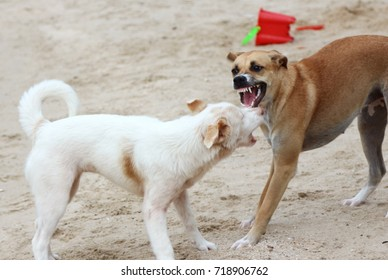 Barking enraged angry dog outdoors. The dog looks aggressive, dangerous and may be infected by rabies.Rabies concept.