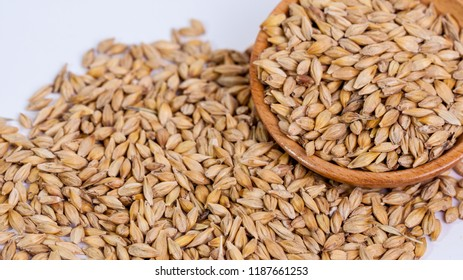 Barley beans. Grains of malt close-up. Barley on sacking background. Food and agriculture concept. Hops