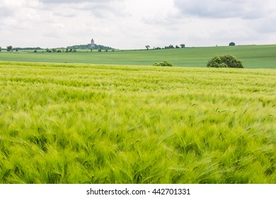 Barley field with castle Humprecht at the horizon - Czech paradise