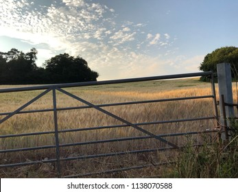 Barley field through gate at sunset, high summer