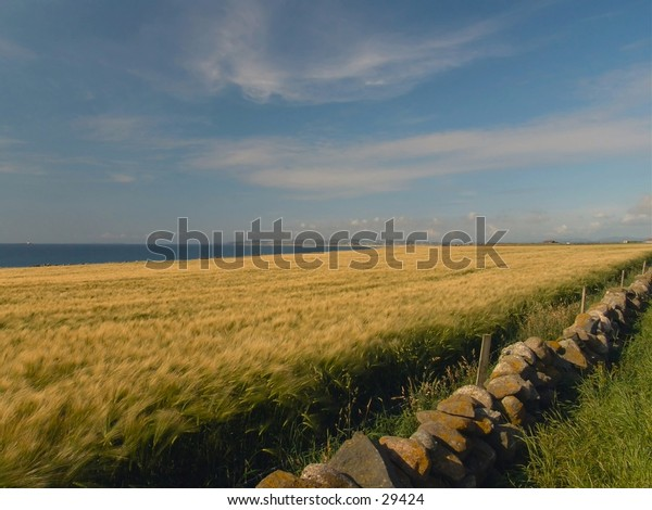 Barley fields by the ocean makes interesting color layers.