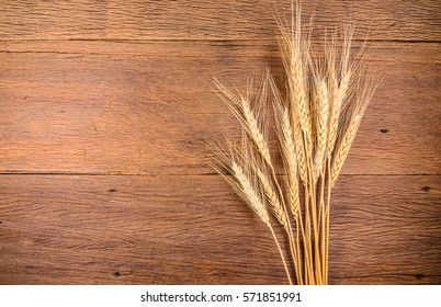 Barley grain on wooden table,Barley grain is raw material of bread, beer, whiskeys, vodkas