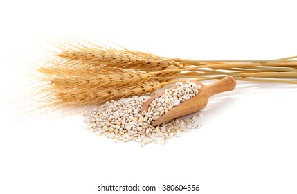 Barley grains isolated on white background.