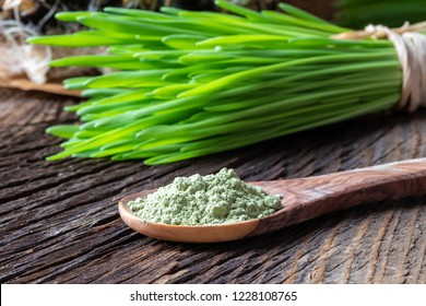 Barley grass powder on a spoon with freshly harvested blades