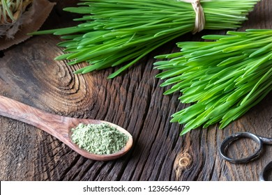 Barley grass powder on a spoon with freshly harvested blades on a rustic background