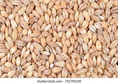 Barley grits, close up as natural food background