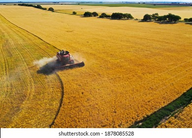 Barley harvest aerial view, in La Pampa, Argentina.