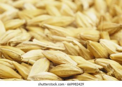 Barley macro images