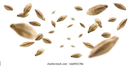 Barley malt grains levitate on a white background