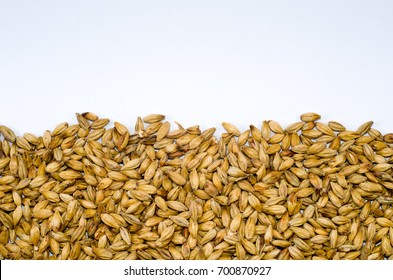 Barley malt texture pale ale for backgrounds, half malt image, half image with white background.