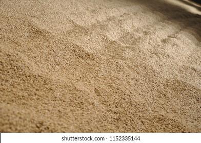 Barley maturing floor malting