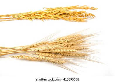 barley and oats cereal grain on white background