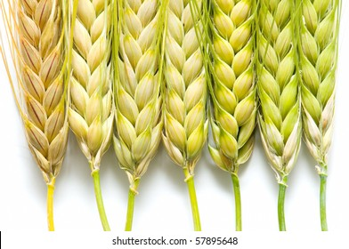 barley on white background