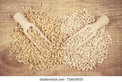 Barley seed or barley grains and pearl barley - CloseUp.