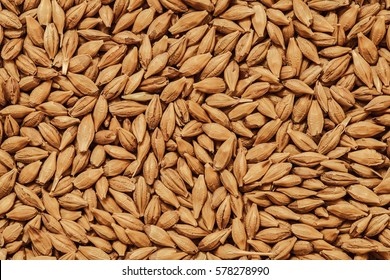barley seeds background