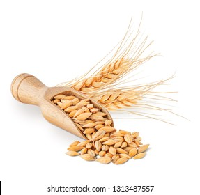 Barley seeds and ears isolated on white background