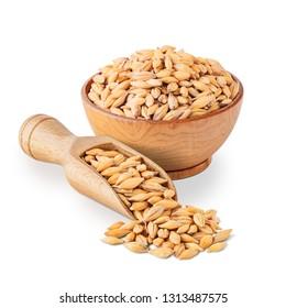 Barley seeds isolated on white background.