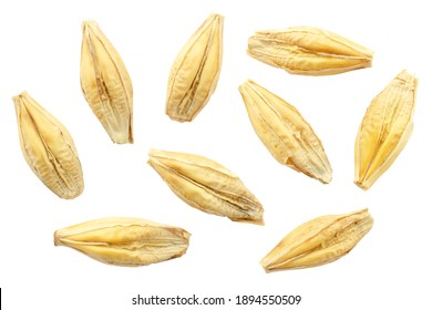 Barley seeds are isolated on white, top view, macro. Barley seeds isolated on a white background. Grains of barley malt on a white background. Set of barley grains isolated on white background.