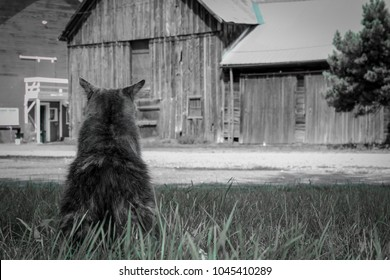 Barn Cat Hanging Outside in Colorado
