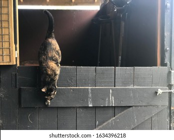 barn cat jumping off a door in St. Petersburg, Florida