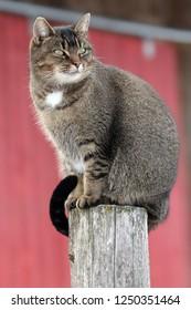 Barn cat on post