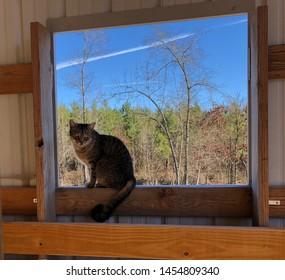 Barn cat posed in window