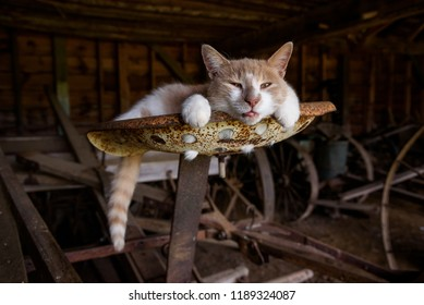 A barn cat sits on a very old tractor
