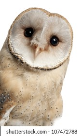 Barn Owl, Tyto alba, 4 months old, portrait and close up against white background