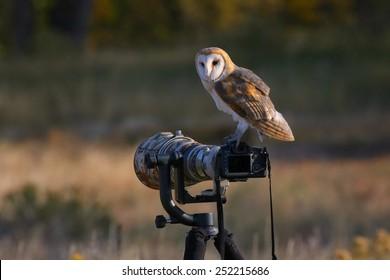 Barn owl (Tyto alba) sitting on a camera