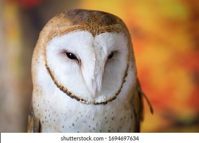Barn Owl Upstate New York Adirondacks Winter Raptor Fest