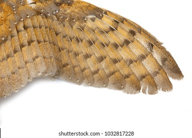 Barn Owl wings with beautiful texture.