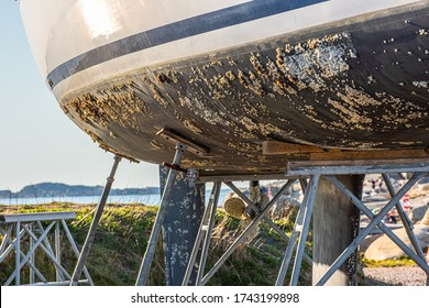 Barnacle growth on the hull of a sailboat. Ready to be scraped, cleaned and coated with antifouling paint.