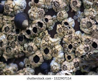 barnacles close up abstract textured