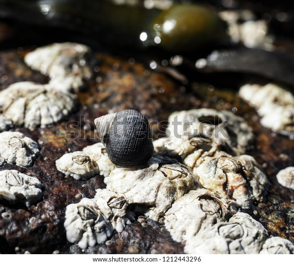 Barnacles close up with a sea snail on top of a mountain at water front