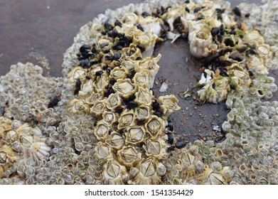 barnacles and mussels on a rock