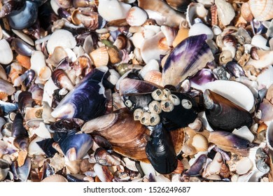Barnacles and shells on the sea shore