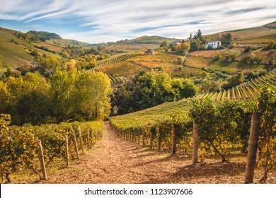 Barolo Langhe e Roero vineyards hills. Autumn landscape, Dolcetto, Barcaresco wine. Cuneo province, Piedmont, Italy.