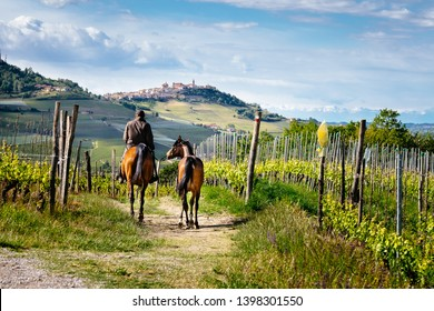 Barolo, Langhe, Piedmont, Italy - May 5, 2019: Man on a horse rides among Barolo vineyards with La Morra village on the hill. Trekking pathway. Viticulture, Langhe, Piedmont, Italy, Unesco heritage