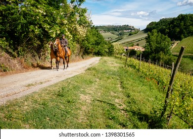 Barolo, Langhe, Piedmont, Italy - May 5, 2019: Man on a horse rides among Vineyard with Monforte d'Alba village on the hill Pathway from Barolo to Monforte. Panoramic itinerary. Viticulture, Langhe.