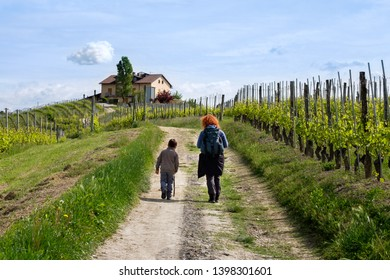 Barolo, Langhe, Piedmont, Italy - May 5, 2019: Pathway from Barolo to Monforte d'Alba among the most famous and historic Barolo vineyards Viticulture, Langhe, Piedmont, Italy, Unesco heritage.