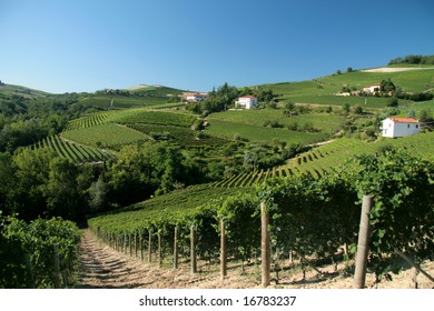 Barolo wineyards against blue sky. Typical Italian landscape.
