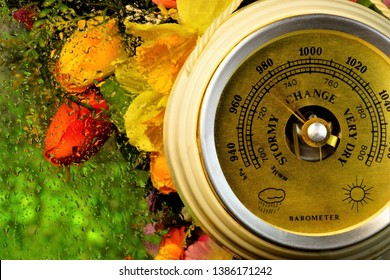 Barometer, rainy weather, water drops on the glass on the background of summer garden flowers. Barometer instrument for measuring atmospheric pressure, it can be used to predict the weather.