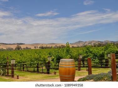 Barossa Valley, South Australia/Australia - 07.11.2018: Jacobs Creek vineyard. Barossa Valley in South Australia, one of Australia's premier wine making regions. Great tourist attraction